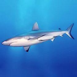 Shark Teeth | Paradigm Dental
