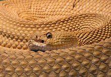 Snake Teeth | Paradigm Dental Austin TX